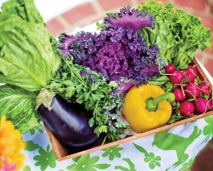 Fall Vegetable Gardening | Tulsa Botanic Garden