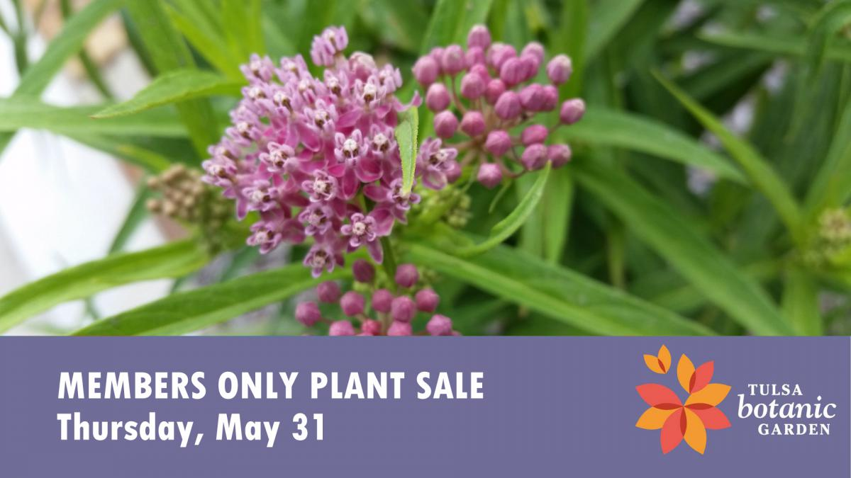 Members Only Plant Sale - milkweed