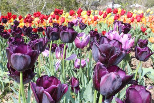 Tulsa Botanic Blooms