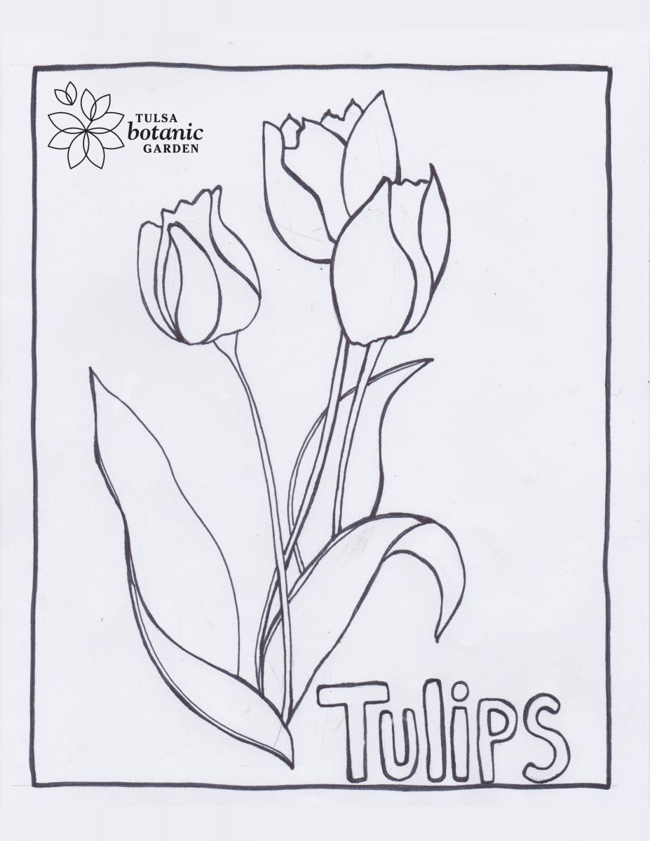 Tulips Coloring Sheet